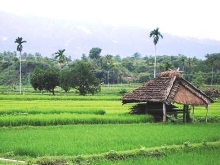 sawah-di-lombok